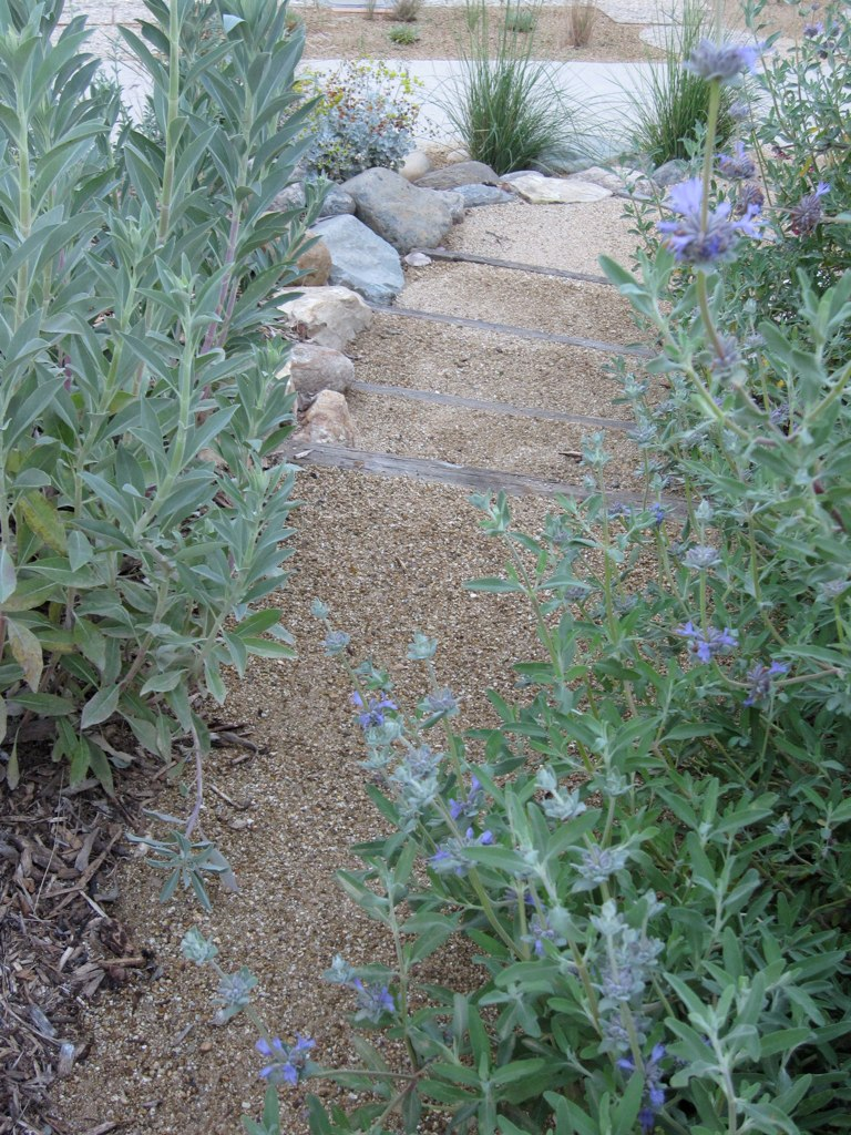 Permeable pathway bordered by salvaged and locally sourced stone and California native plants