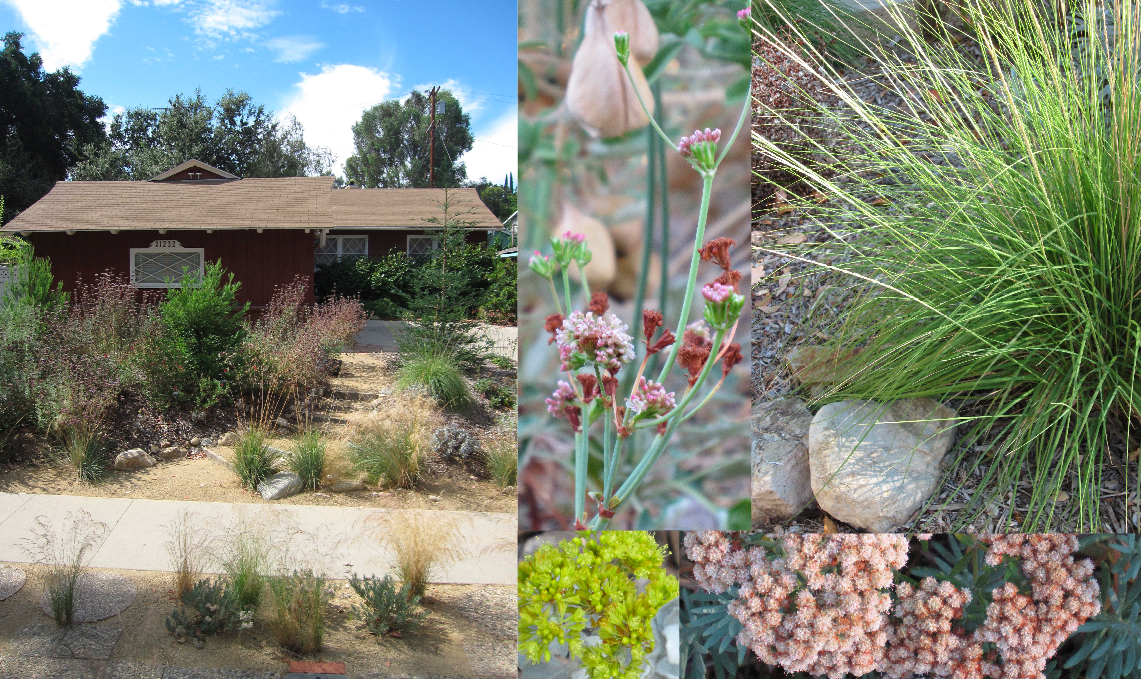 California native garden collage