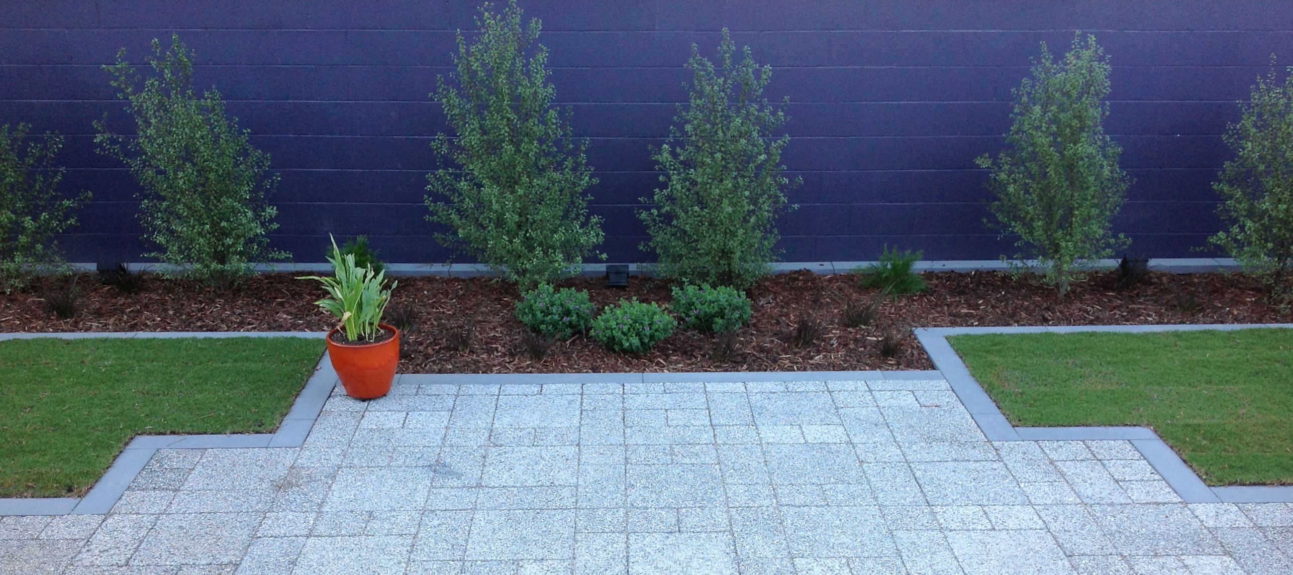 Pittosporum planted to provide privacy, perimeter wall painted plum